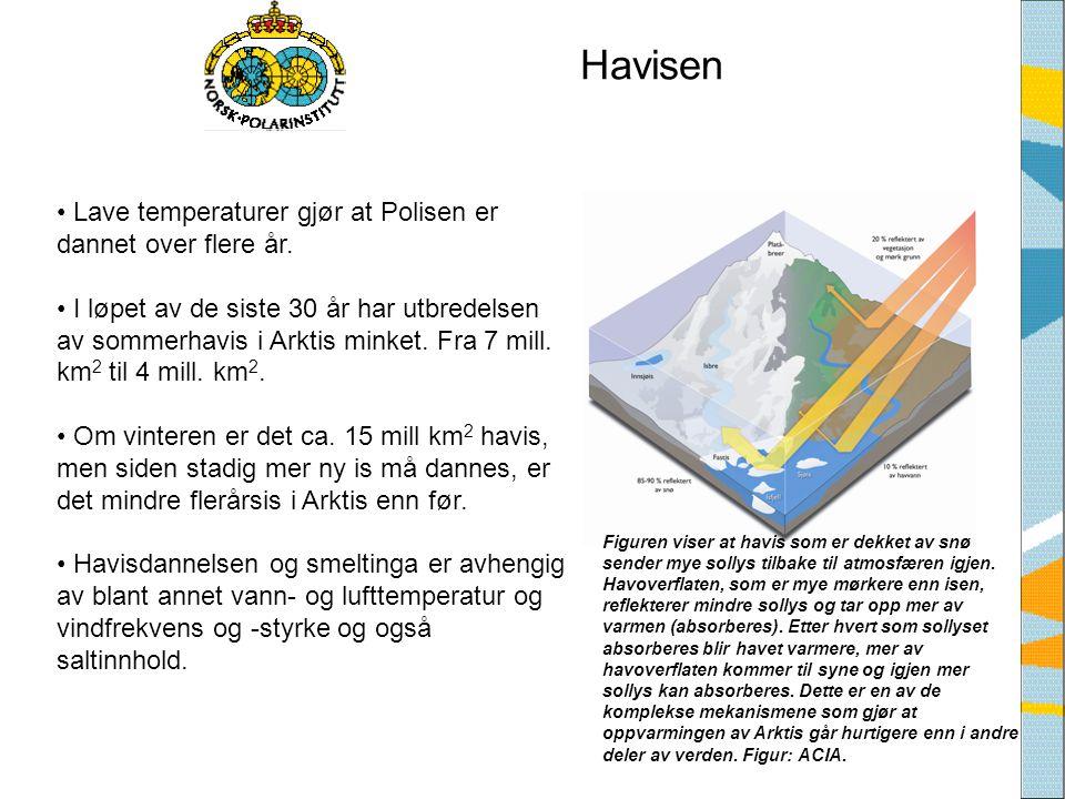 Havisen Lave temperaturer gjør at Polisen er dannet over flere år.
