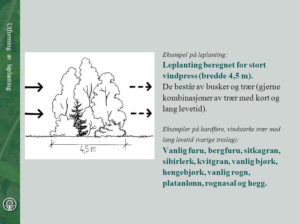 Leplanting beregnet for stort vindpress (bredde 4,5 m).