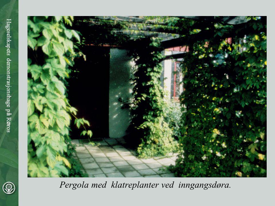 Pergola med klatreplanter ved inngangsdøra.
