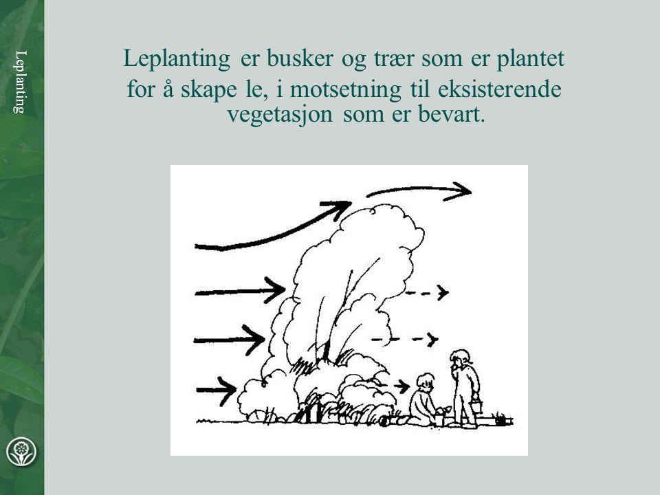 Leplanting er busker og trær som er plantet