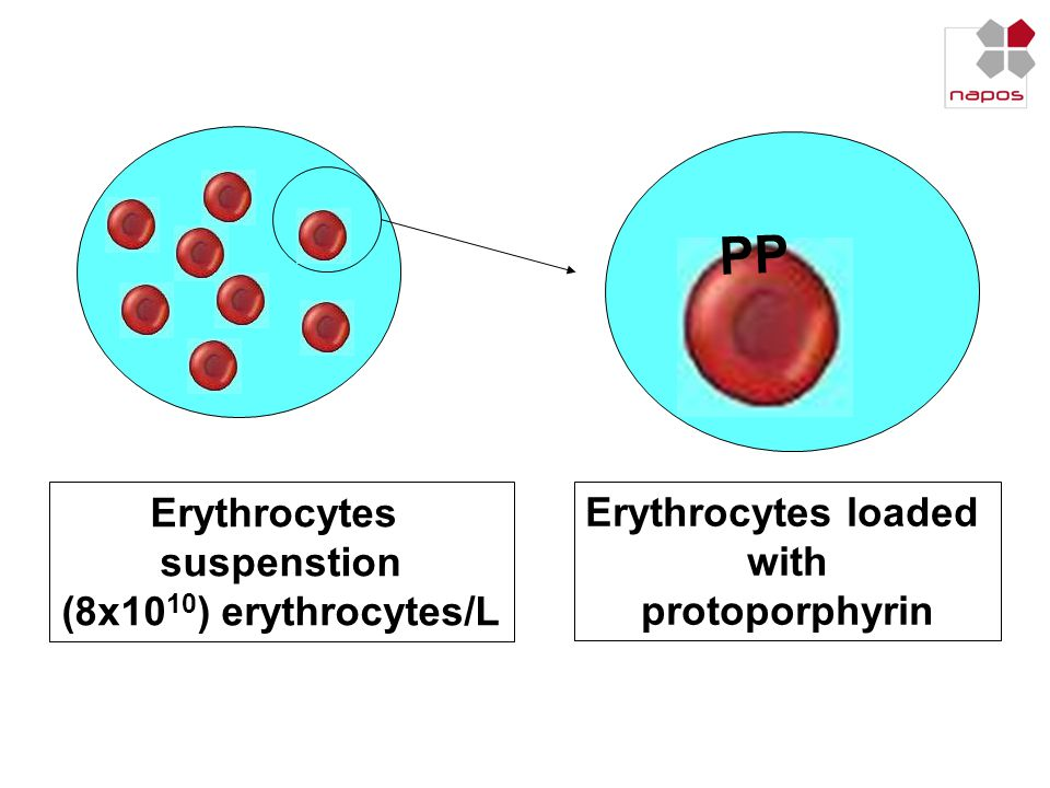 PP Erythrocytes suspenstion (8x1010) erythrocytes/L