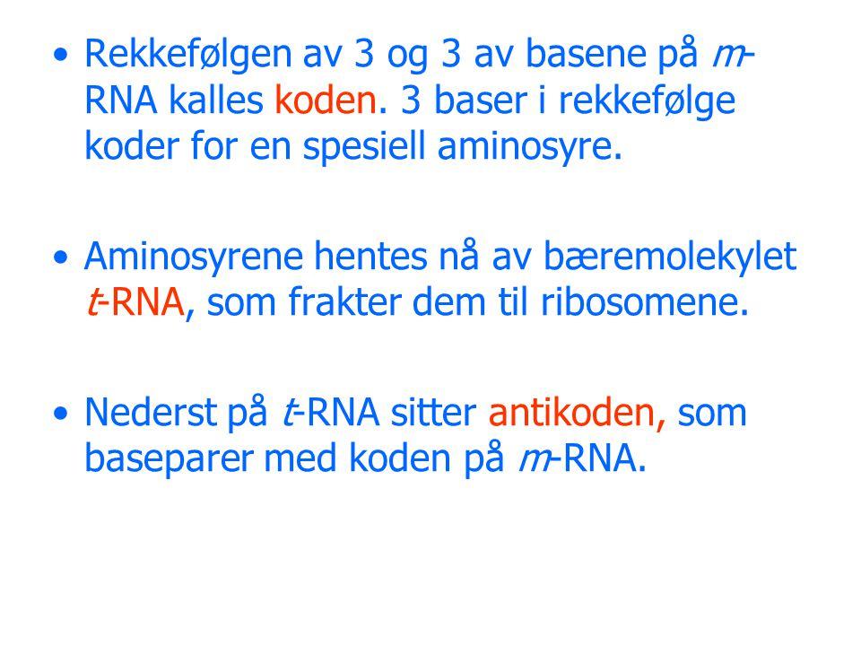 Rekkefølgen av 3 og 3 av basene på m-RNA kalles koden