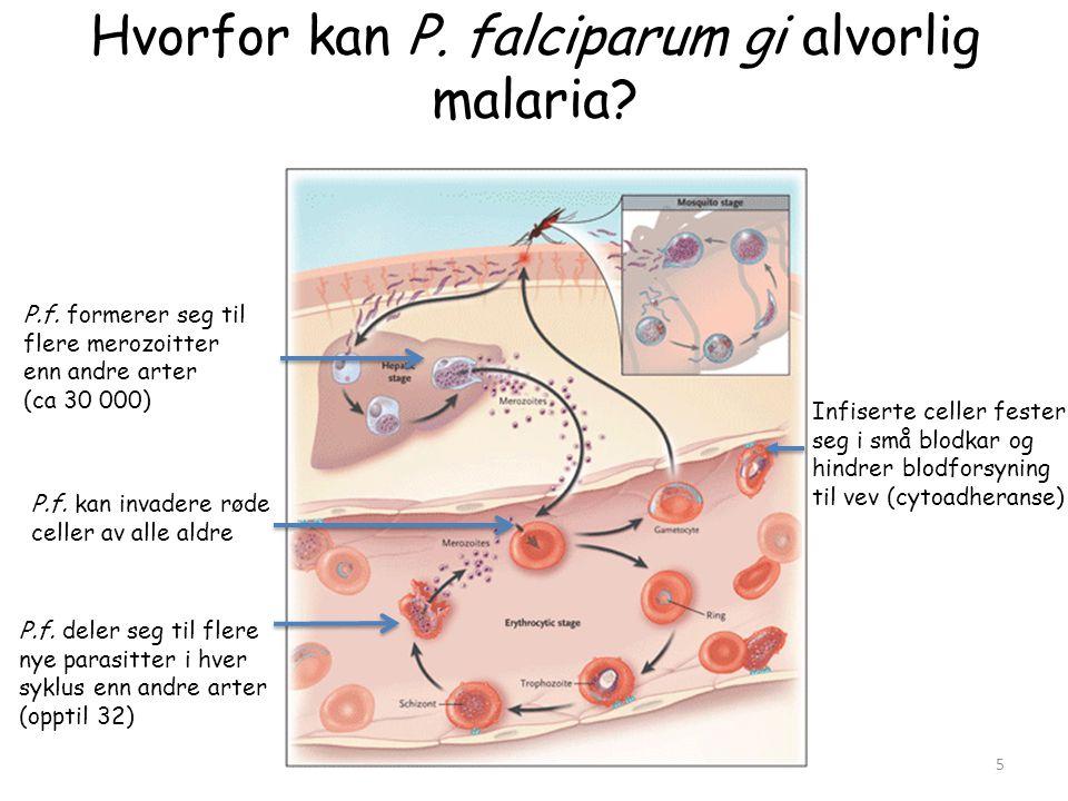 Hvorfor kan P. falciparum gi alvorlig malaria