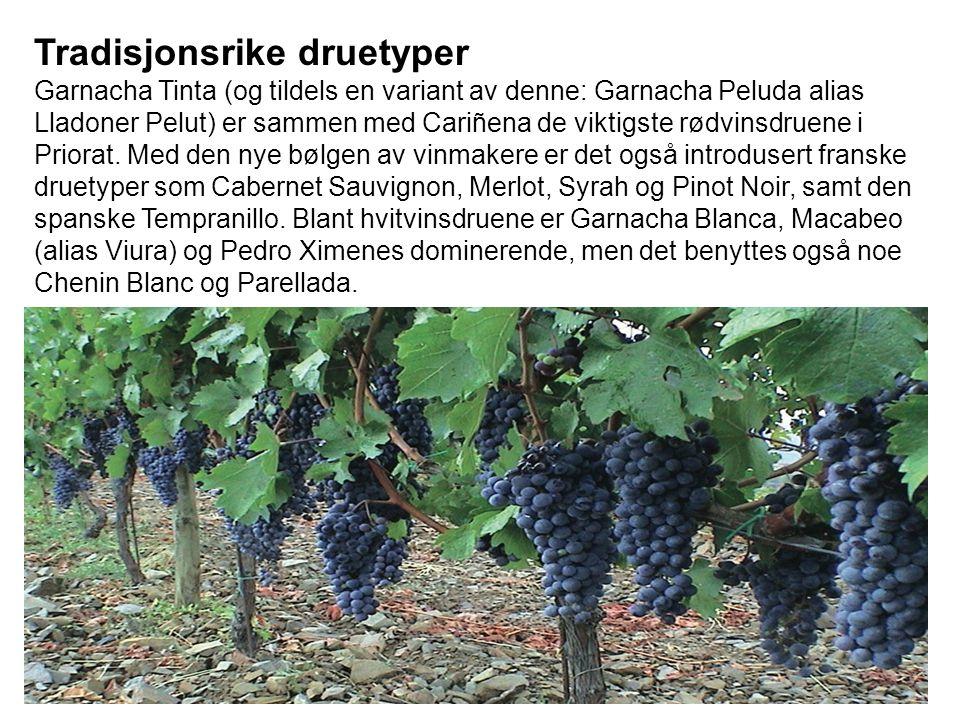 Tradisjonsrike druetyper Garnacha Tinta (og tildels en variant av denne: Garnacha Peluda alias Lladoner Pelut) er sammen med Cariñena de viktigste rødvinsdruene i Priorat.