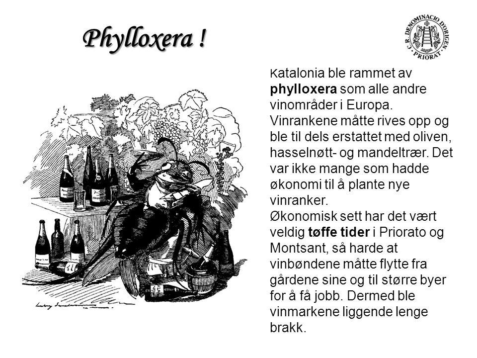 Phylloxera !
