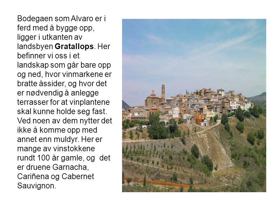 Bodegaen som Alvaro er i ferd med å bygge opp, ligger i utkanten av landsbyen Gratallops.