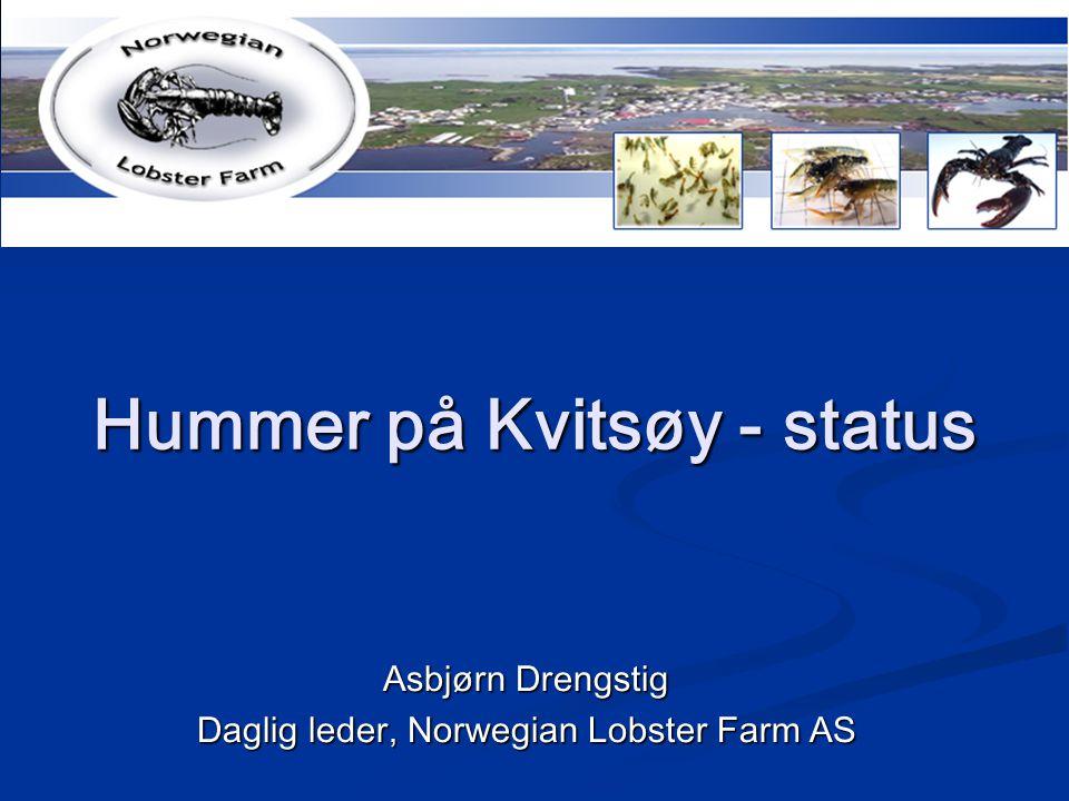 Hummer på Kvitsøy - status