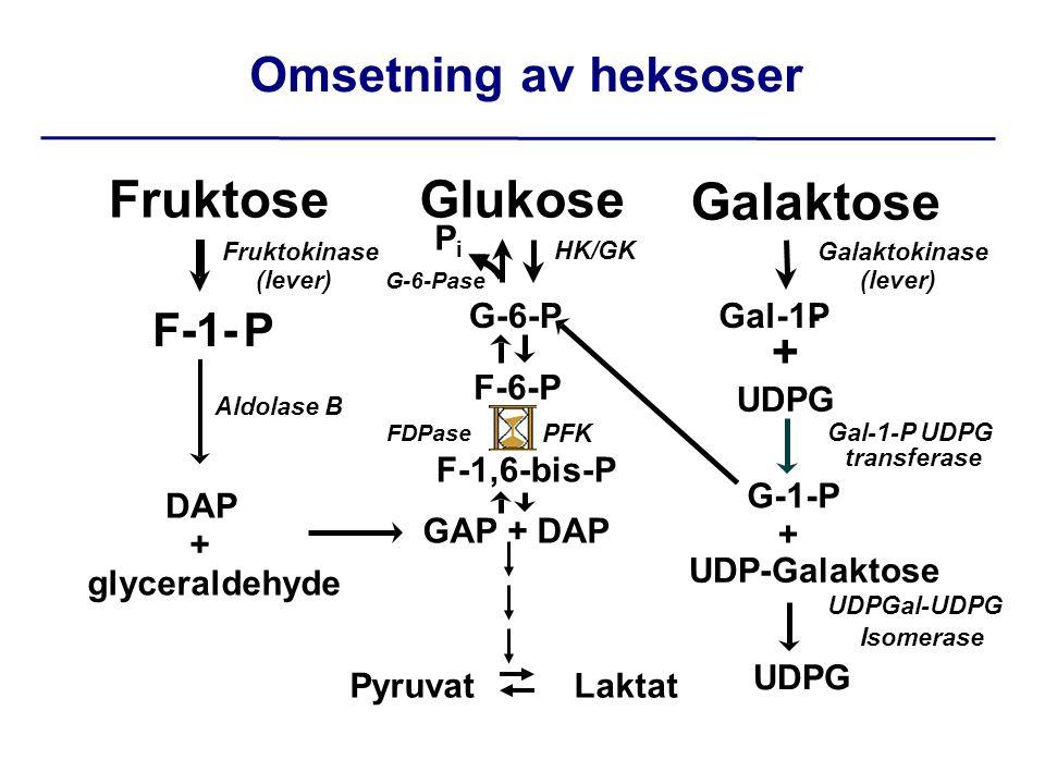 Fruktose Glukose Galaktose Omsetning av heksoser F-1- P + Pi G-6-P
