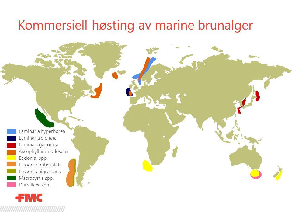 Kommersiell høsting av marine brunalger