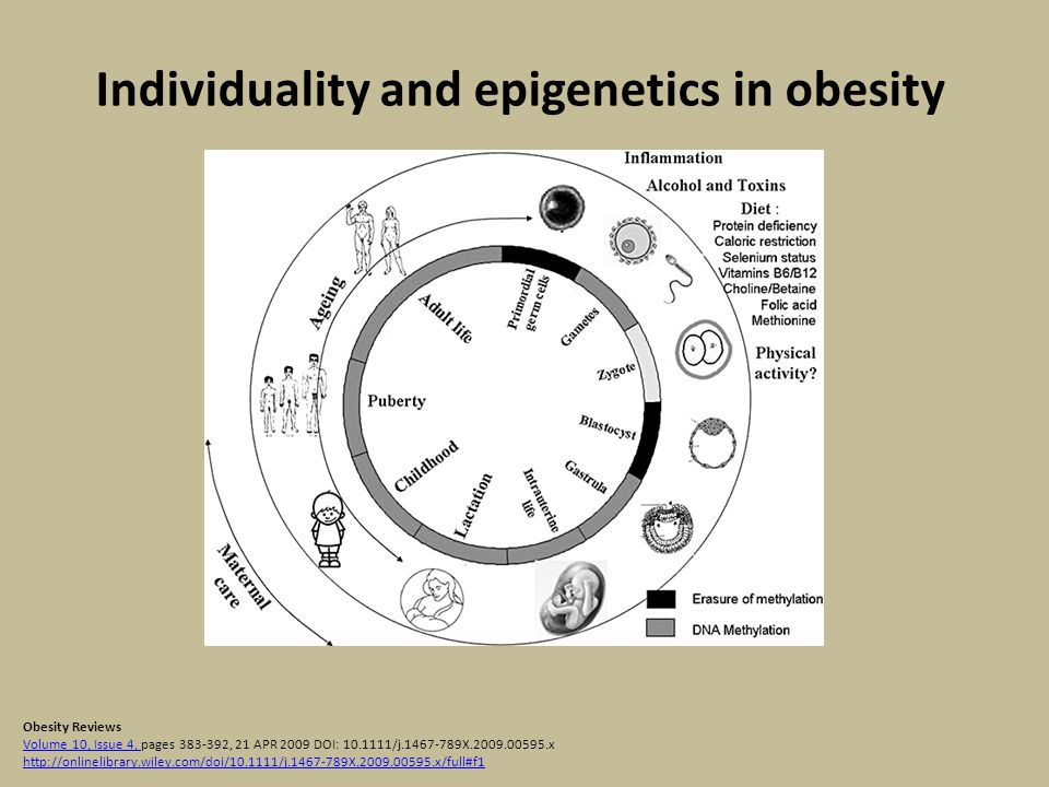 Individuality and epigenetics in obesity