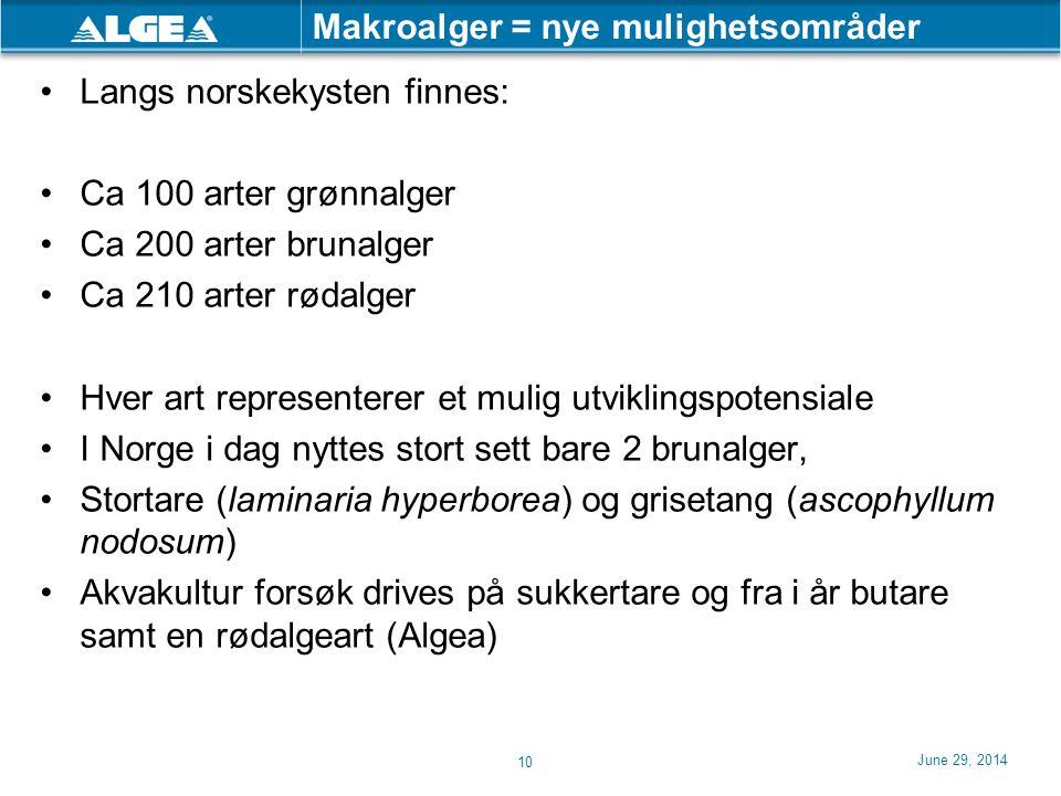 Makroalger = nye mulighetsområder