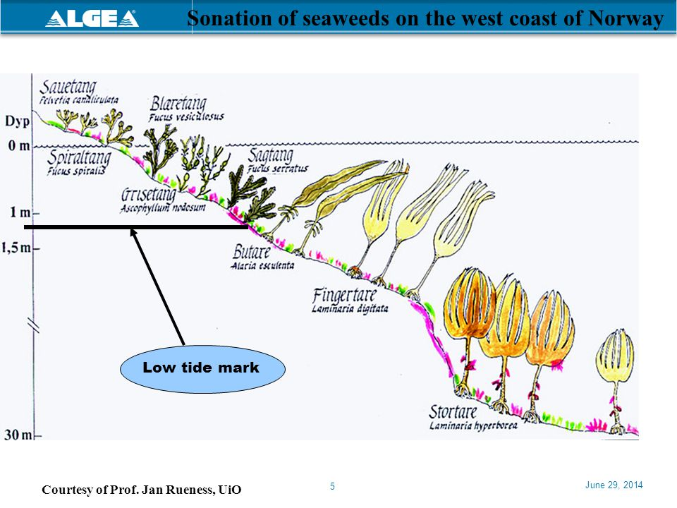 Sonation of seaweeds on the west coast of Norway