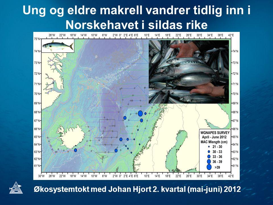Ung og eldre makrell vandrer tidlig inn i Norskehavet i sildas rike