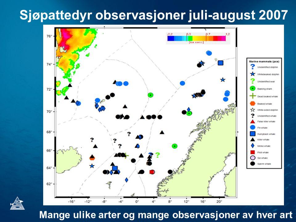 Sjøpattedyr observasjoner juli-august 2007