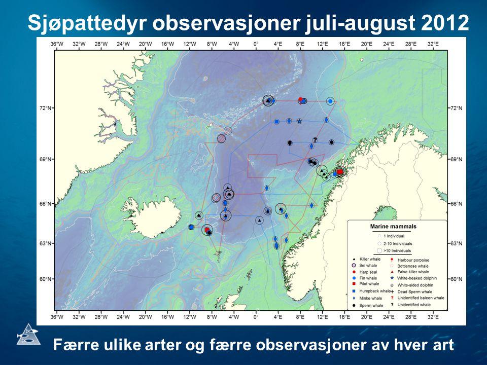 Sjøpattedyr observasjoner juli-august 2012