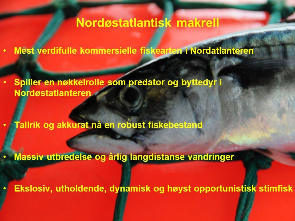Nordøstatlantisk makrell