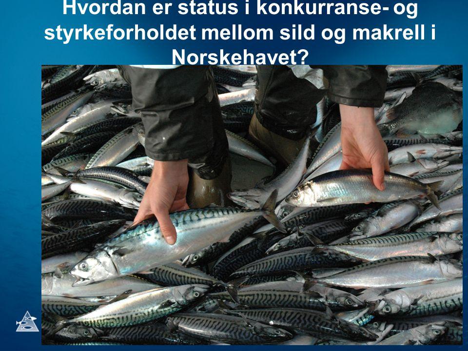 Hvordan er status i konkurranse- og styrkeforholdet mellom sild og makrell i Norskehavet
