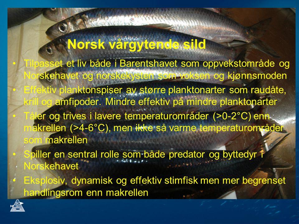 Norsk vårgytende sild Tilpasset et liv både i Barentshavet som oppvekstområde og Norskehavet og norskekysten som voksen og kjønnsmoden.
