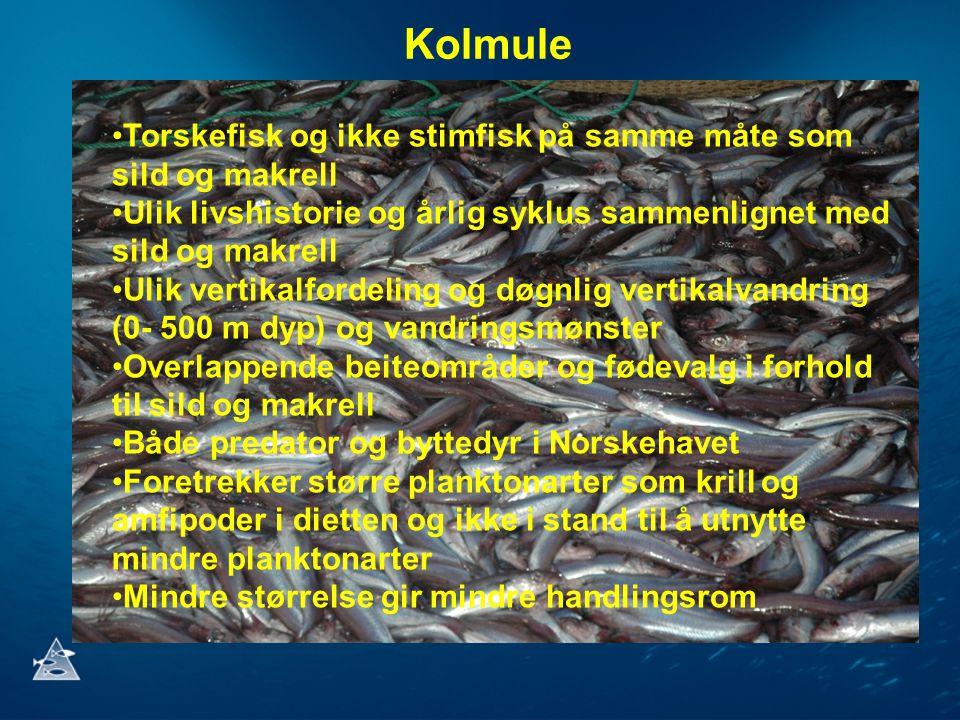 Kolmule Torskefisk og ikke stimfisk på samme måte som sild og makrell