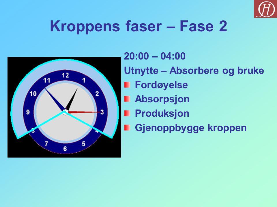 Kroppens faser – Fase 2 20:00 – 04:00 Utnytte – Absorbere og bruke