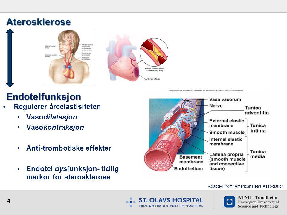 Aterosklerose Endotelfunksjon Regulerer åreelastisiteten