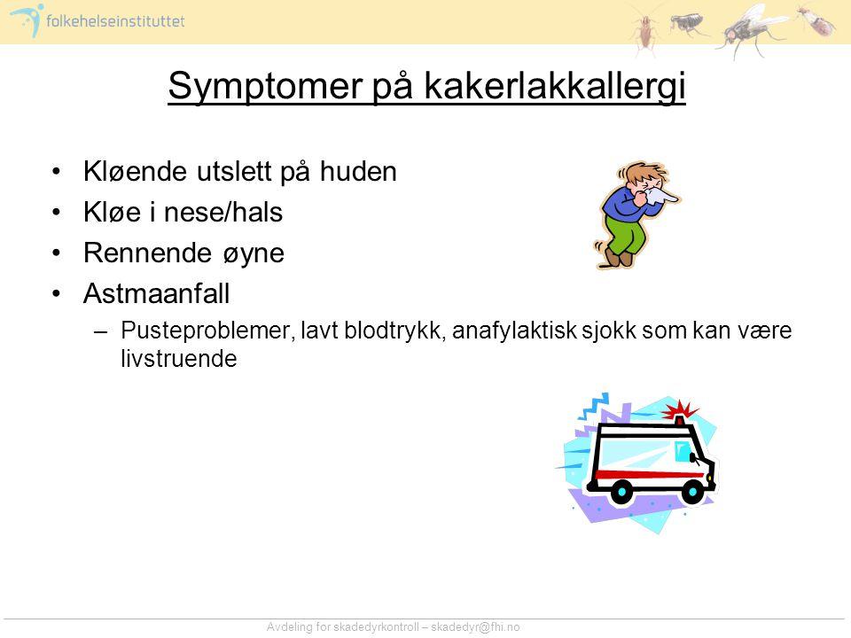 Symptomer på kakerlakkallergi