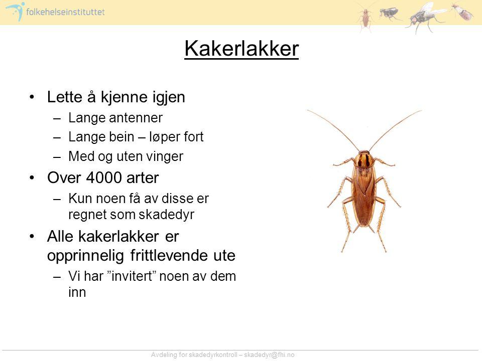 Kakerlakker Lette å kjenne igjen Over 4000 arter