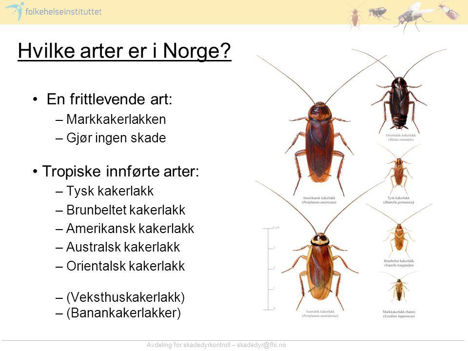 Hvilke arter er i Norge En frittlevende art: Tropiske innførte arter: