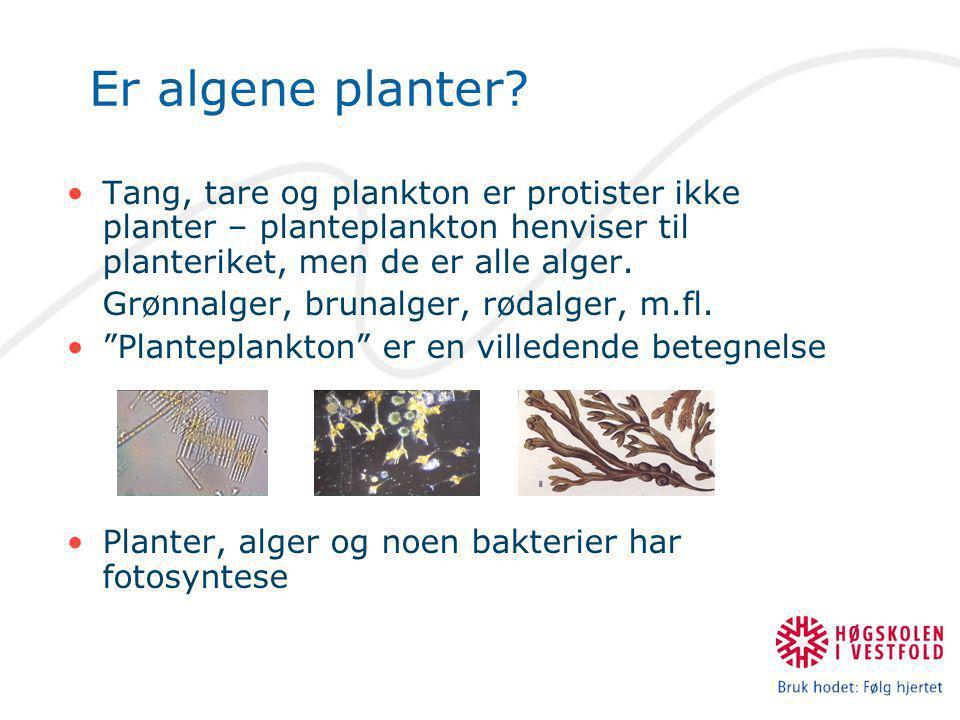 Er algene planter Tang, tare og plankton er protister ikke planter – planteplankton henviser til planteriket, men de er alle alger.