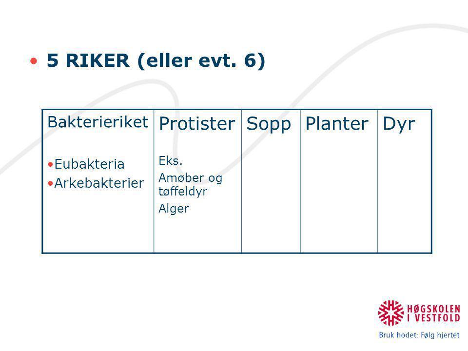 5 RIKER (eller evt. 6) Protister Sopp Planter Dyr Bakterieriket