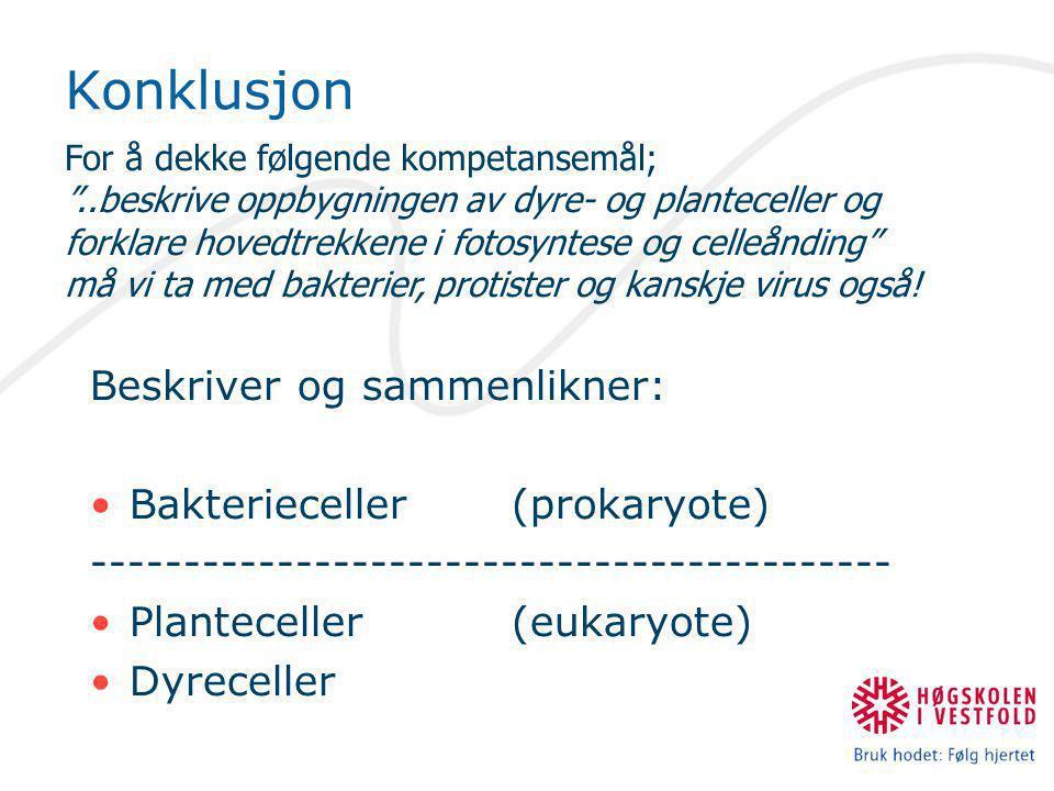 Konklusjon Beskriver og sammenlikner: Bakterieceller (prokaryote)