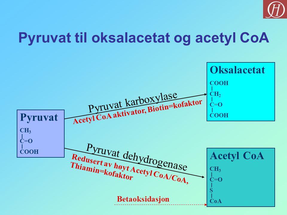 Pyruvat til oksalacetat og acetyl CoA