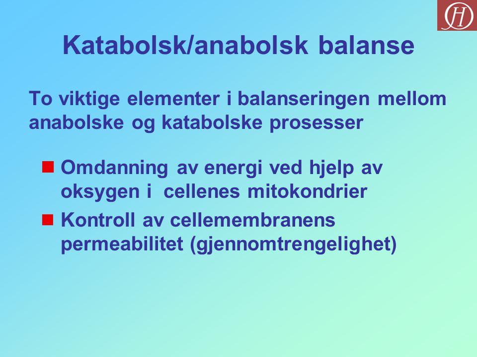 Katabolsk/anabolsk balanse