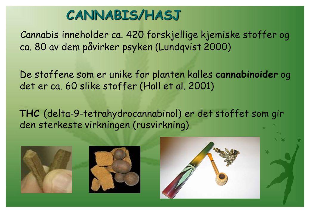 CANNABIS/HASJ Cannabis inneholder ca. 420 forskjellige kjemiske stoffer og ca. 80 av dem påvirker psyken (Lundqvist 2000)