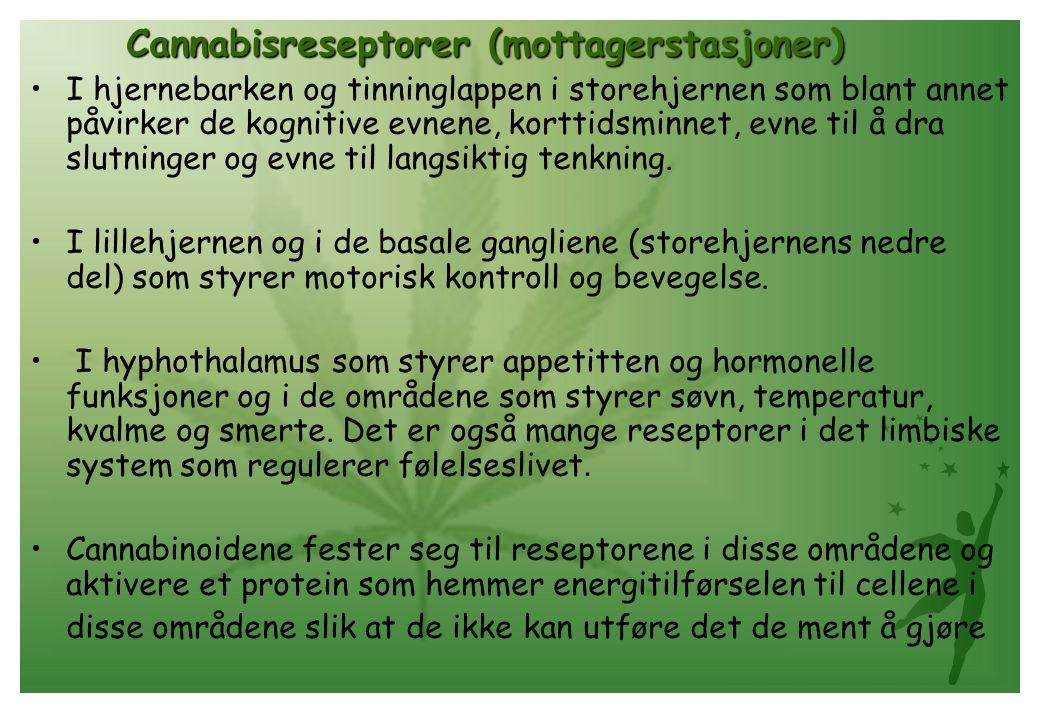 Cannabisreseptorer (mottagerstasjoner)