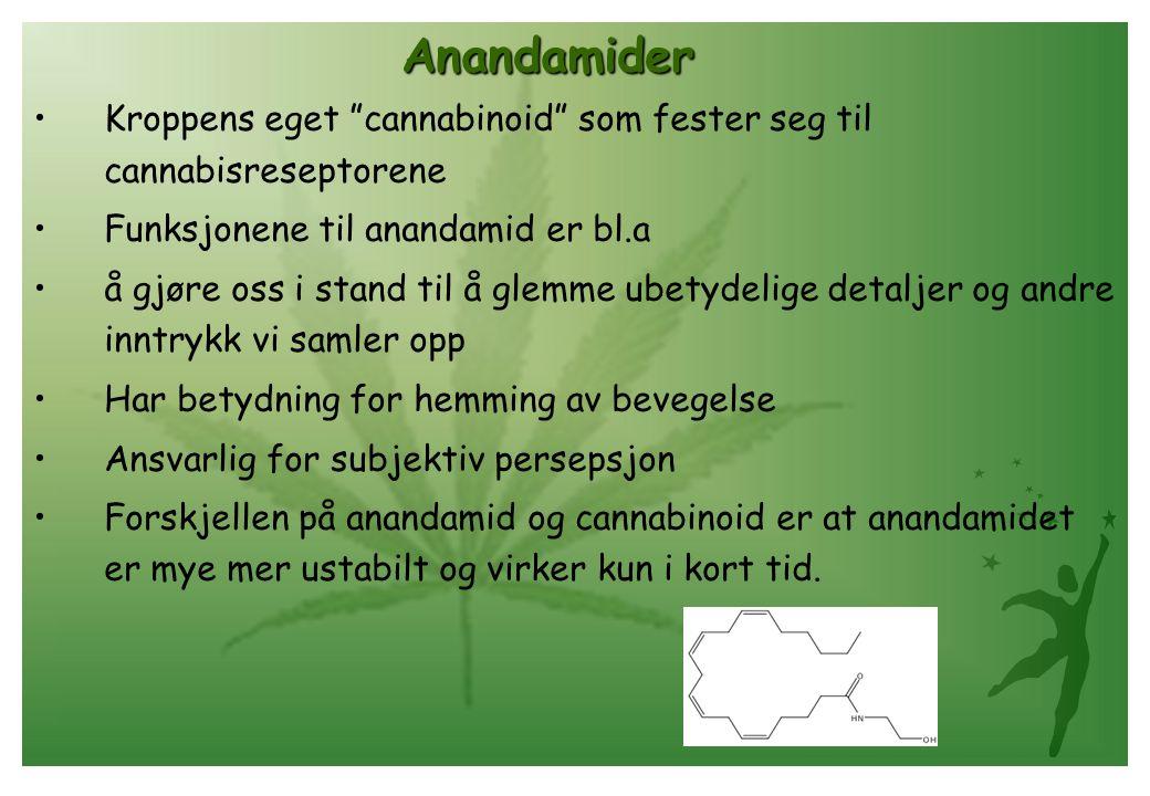 Anandamider Kroppens eget cannabinoid som fester seg til cannabisreseptorene. Funksjonene til anandamid er bl.a.