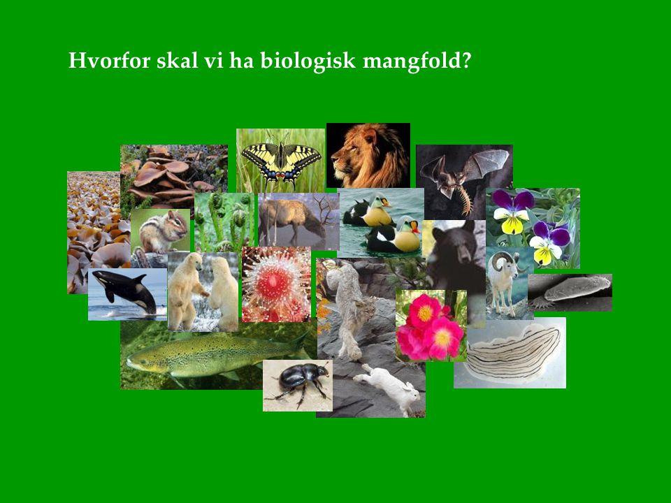 Hvorfor skal vi ha biologisk mangfold