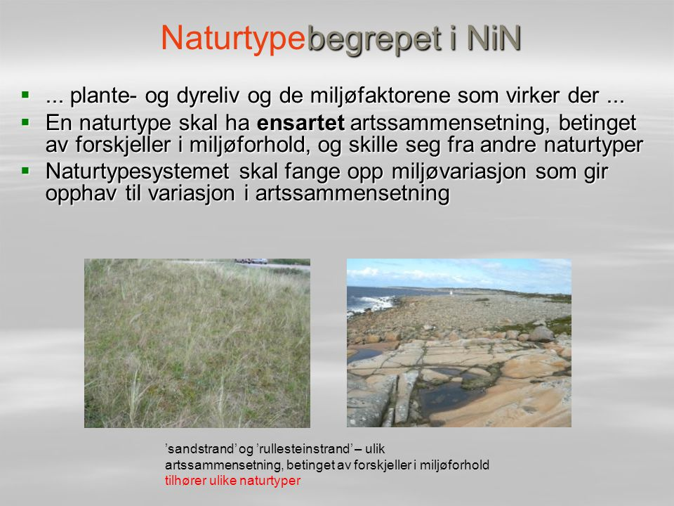 Naturtypebegrepet i NiN