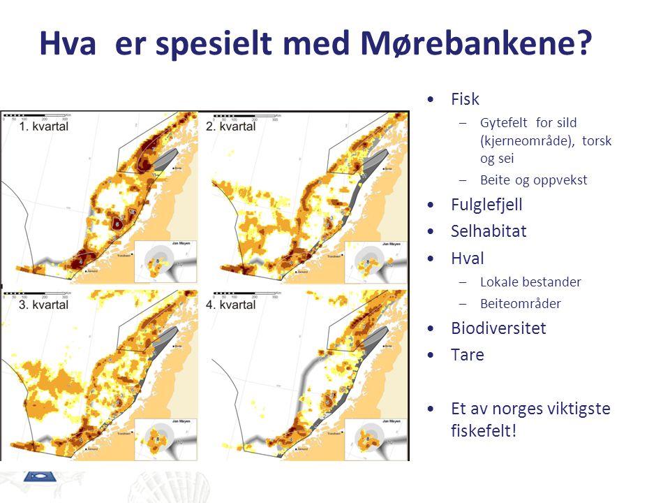 Hva er spesielt med Mørebankene