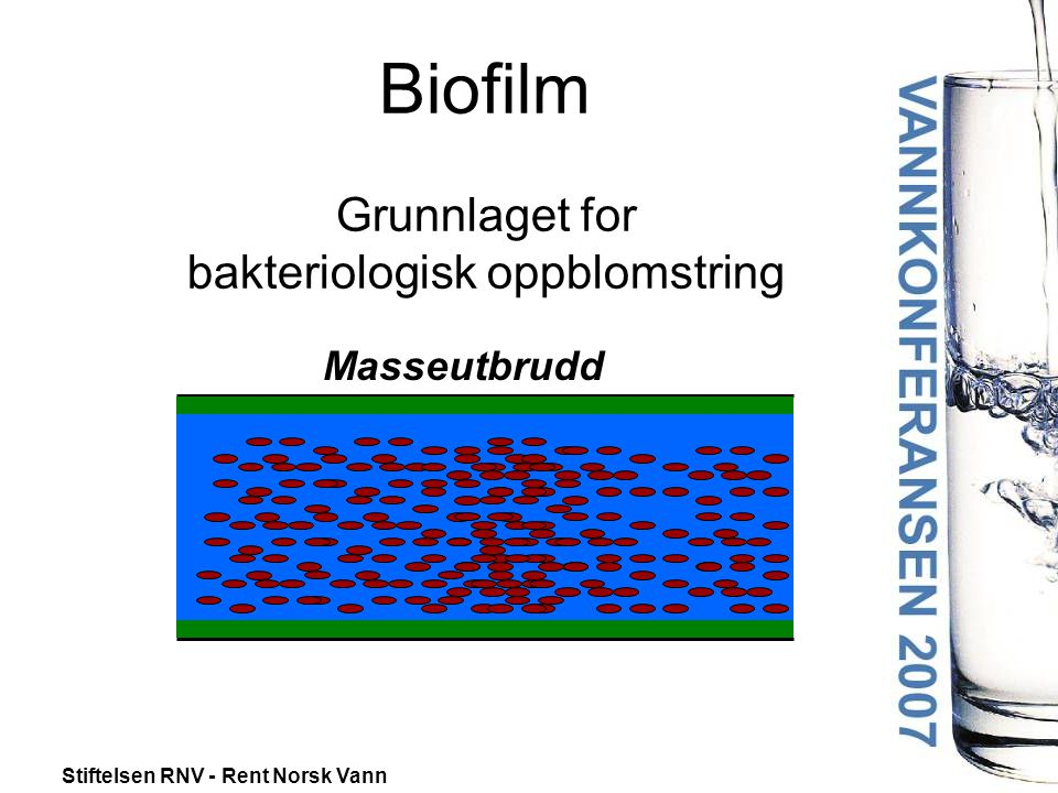 Biofilm Grunnlaget for bakteriologisk oppblomstring