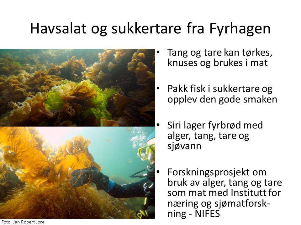 Havsalat og sukkertare fra Fyrhagen