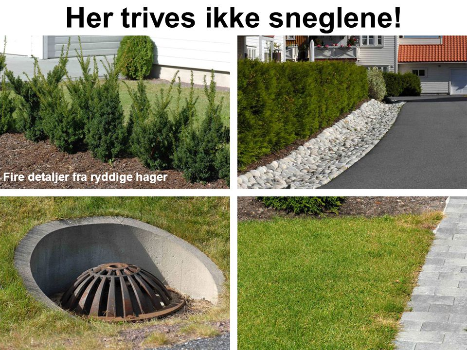 Her trives ikke sneglene!