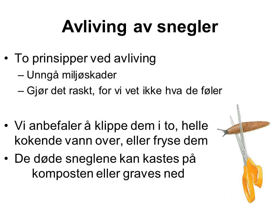Avliving av snegler To prinsipper ved avliving
