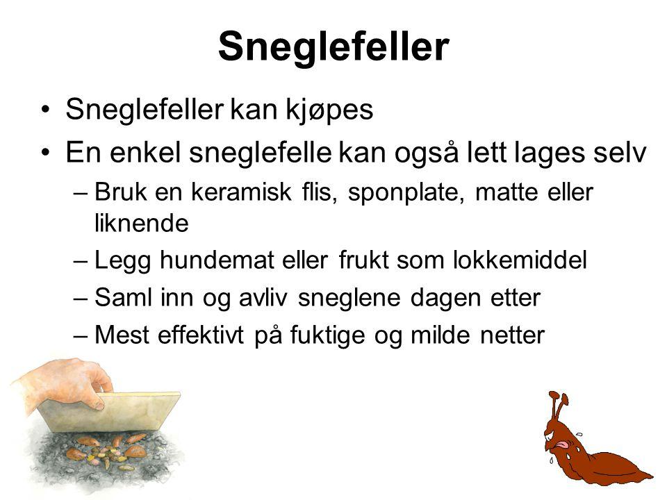 Sneglefeller Sneglefeller kan kjøpes