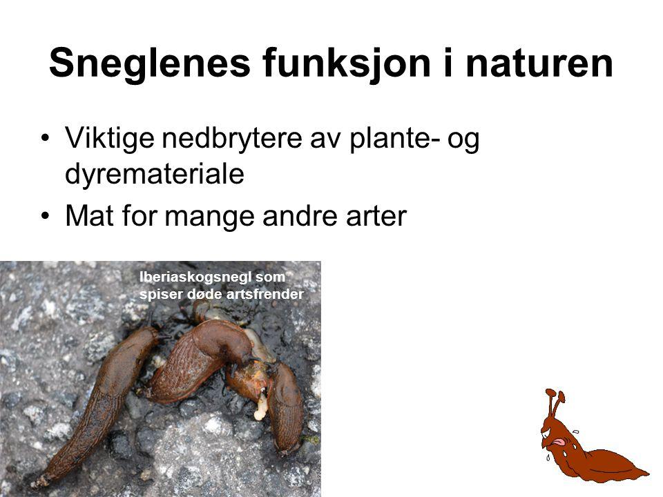 Sneglenes funksjon i naturen