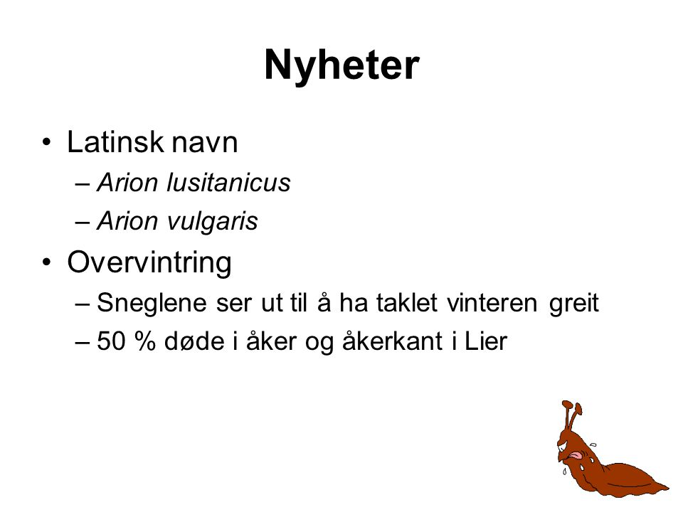 Nyheter Latinsk navn Overvintring Arion lusitanicus Arion vulgaris
