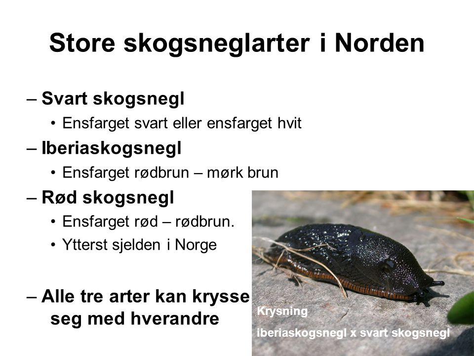Store skogsneglarter i Norden