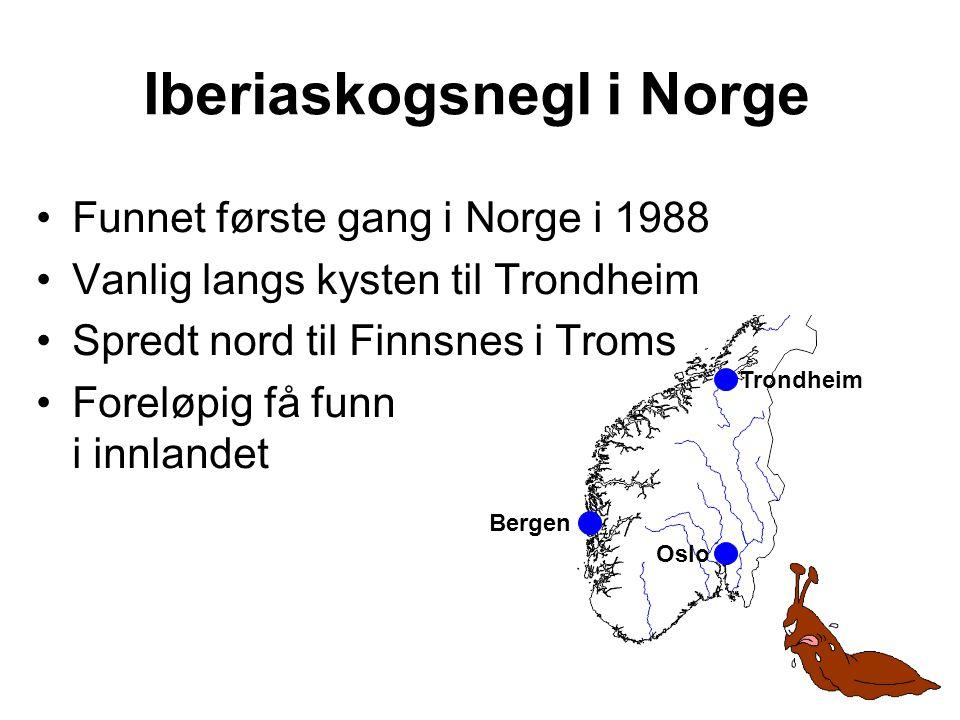Iberiaskogsnegl i Norge