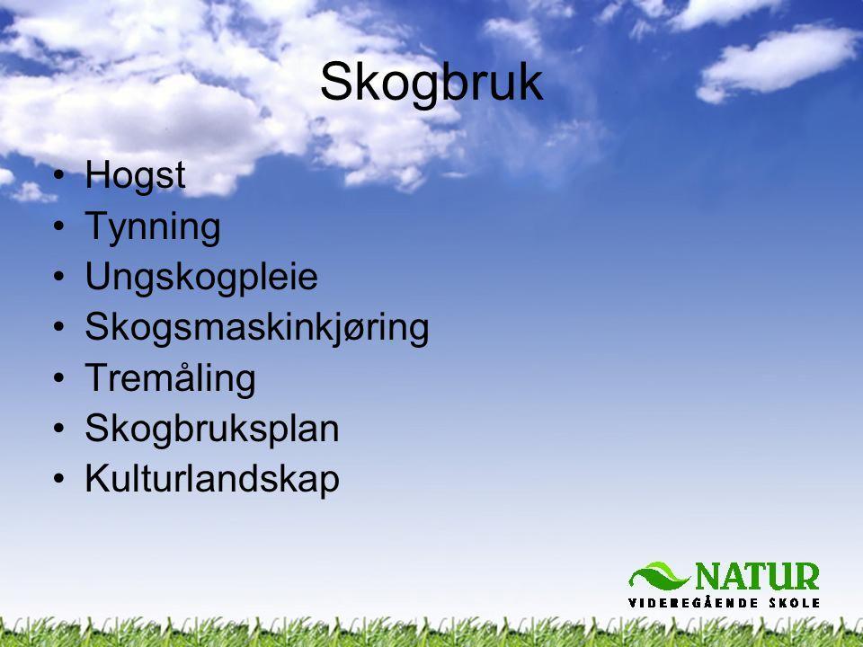 Skogbruk Hogst Tynning Ungskogpleie Skogsmaskinkjøring Tremåling