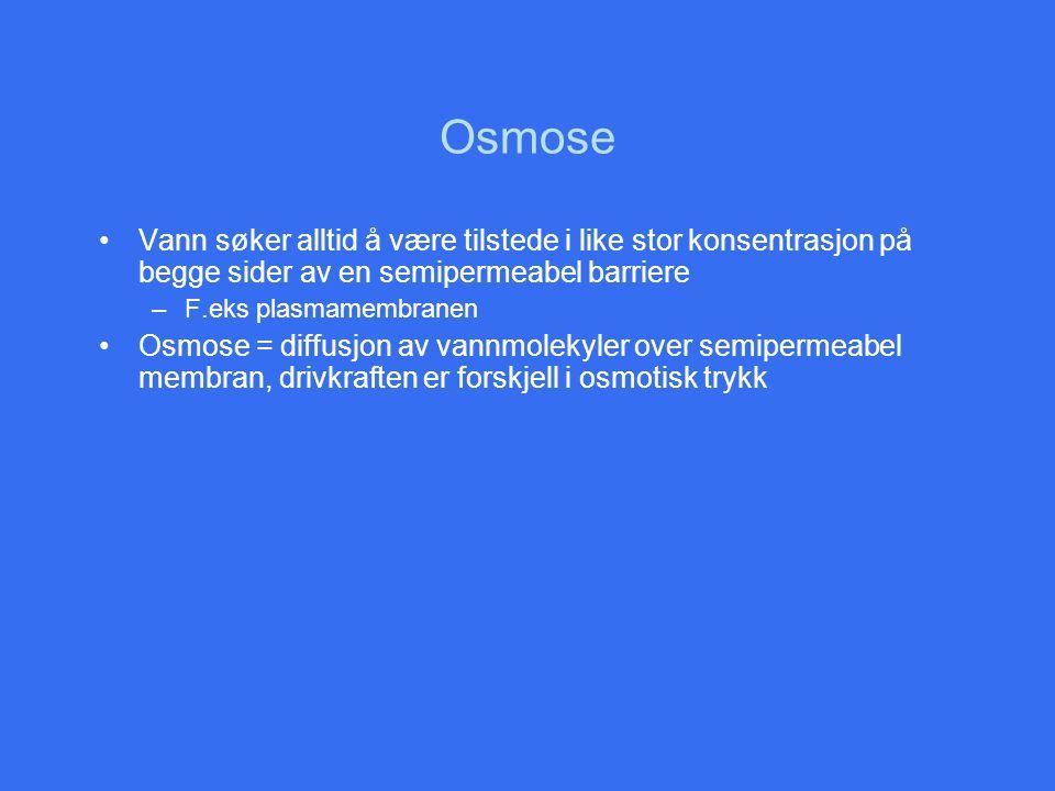Osmose Vann søker alltid å være tilstede i like stor konsentrasjon på begge sider av en semipermeabel barriere.